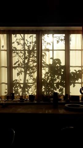 skygger-i-vinduet
