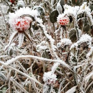 frost november